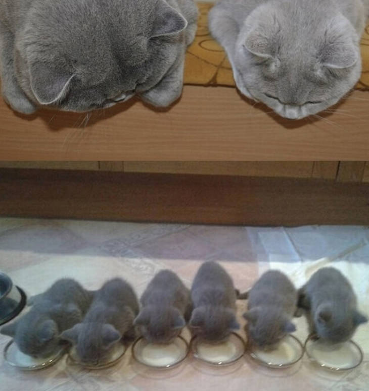 15 fotos gatos y gatitos