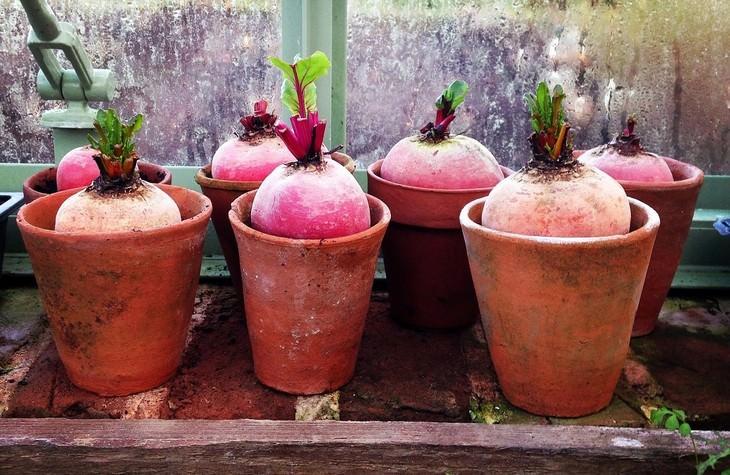 vegetales para cultivar en maceta