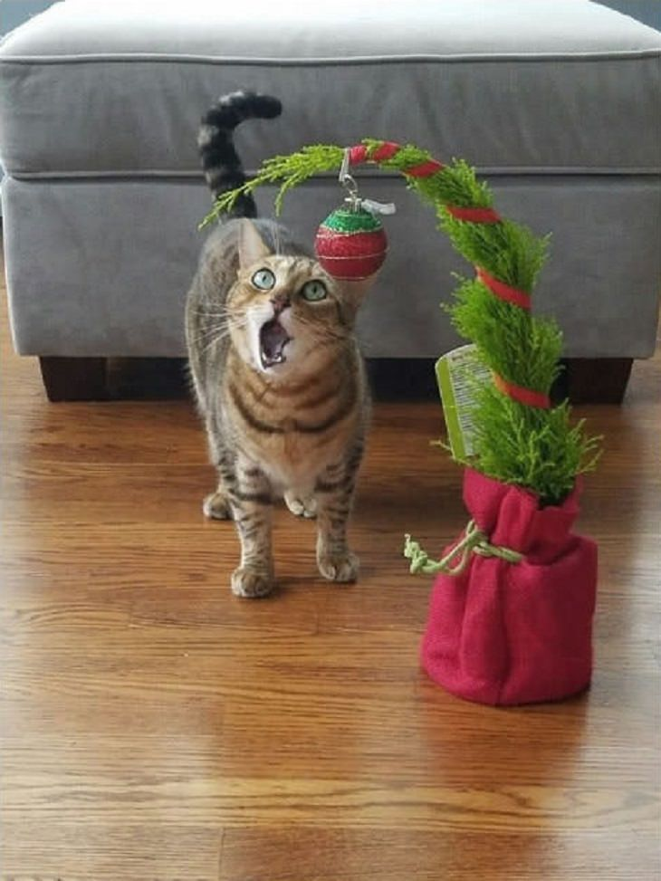 gatos y arboles de navidad