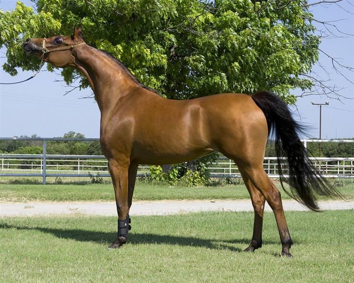 razas de caballo