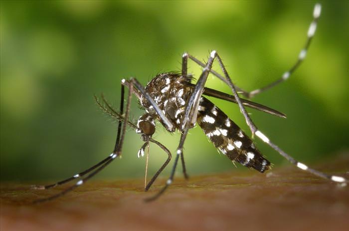 Todo Lo Que Necesitas Saber Sobre El Virus Del Zika