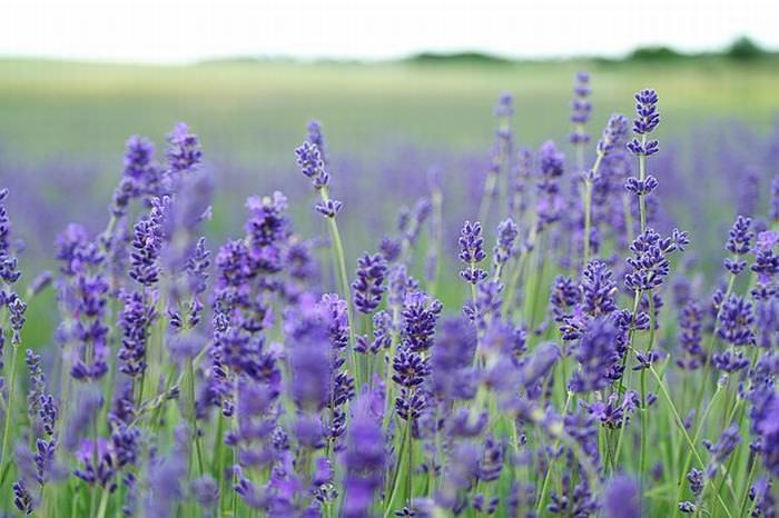 10 Flores y Plantas Que Te Ayudarán a Dormir Mejor