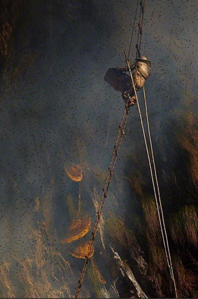 Los Fascinantes Cazadores De Miel En Nepal