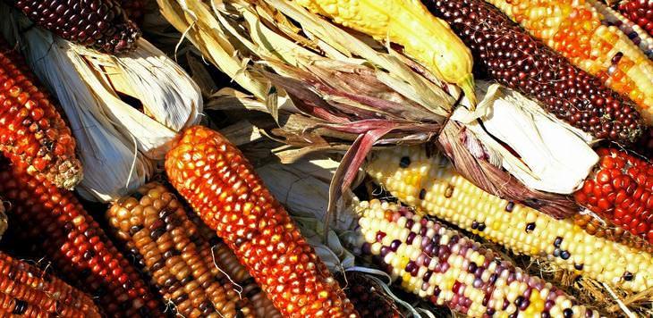 beneficios del maiz