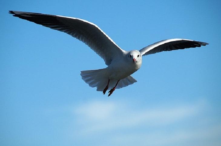 concurso internacional de pájaros