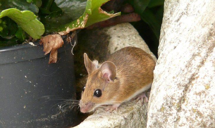 la ratoner, ayuda al prójimo