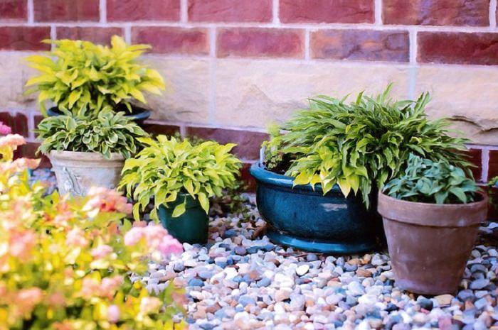 lenguaje de las plantas
