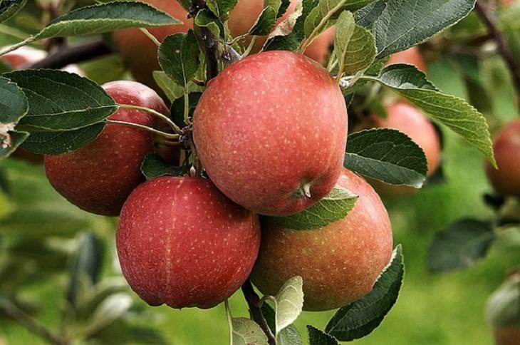 beneficios manzanas