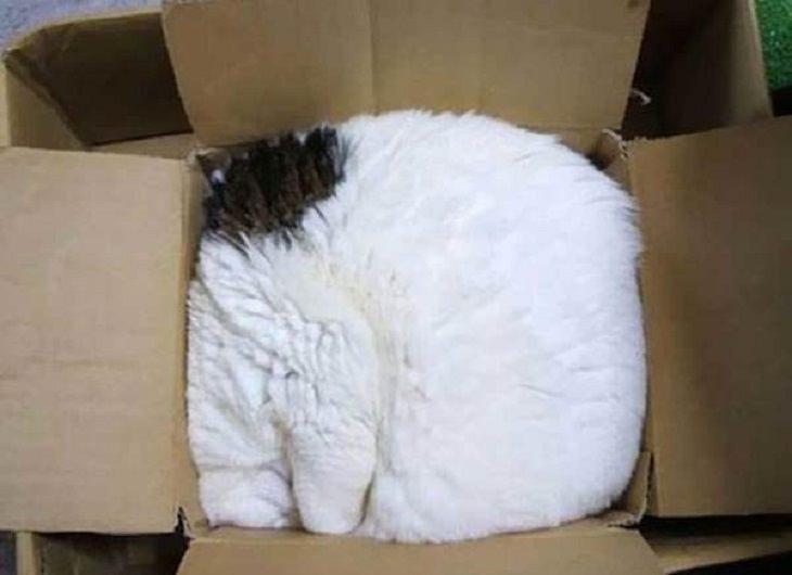 gatos durmiendo en cualquier lugar