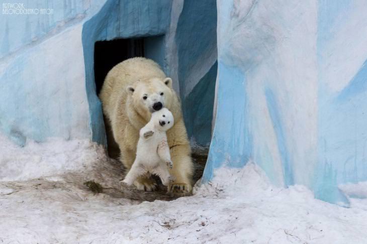 amor padres e hijos reino animal