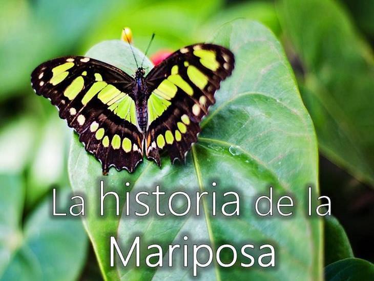 La Mariposa Una Lección De Vida Espiritualidad