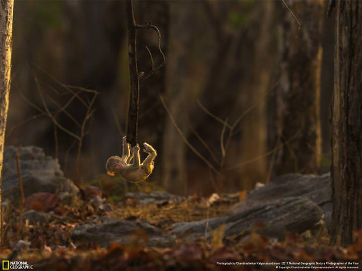 fotos National Geographic  2017