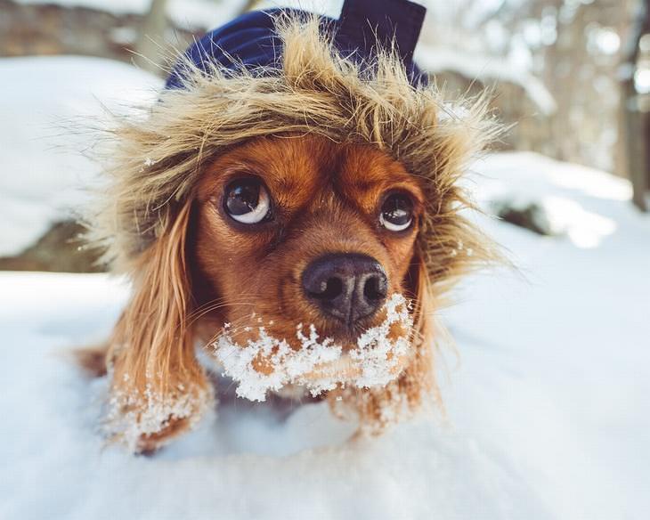 consejos inverno mascotas