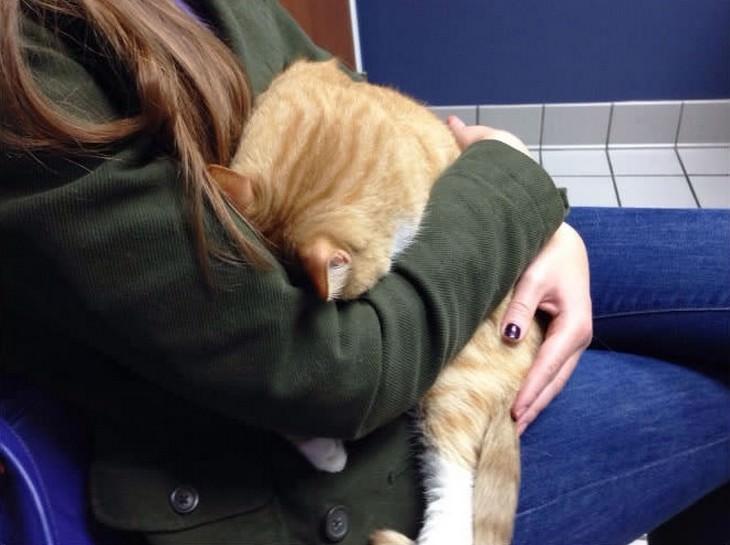 gatos en veterinarios