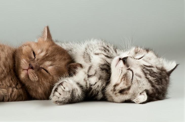 beneficios de poseer un gato