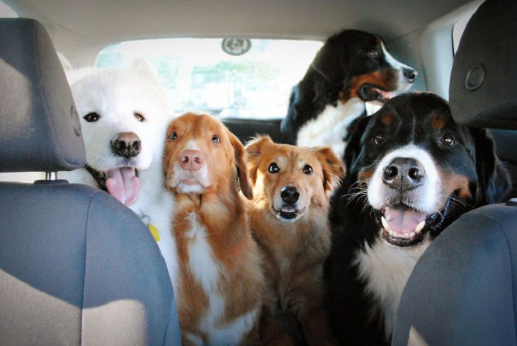 20 fotos varios perros