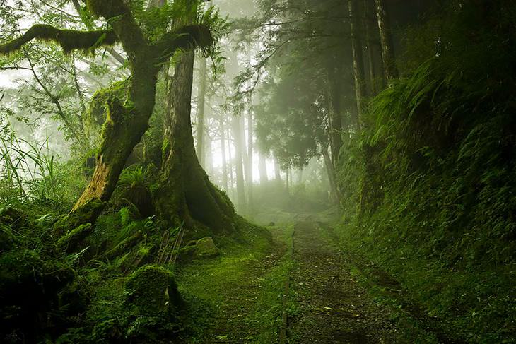 20 increíbles bosques