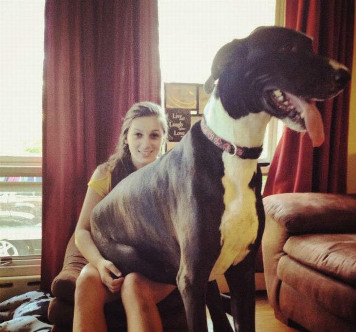 15 perros grandes