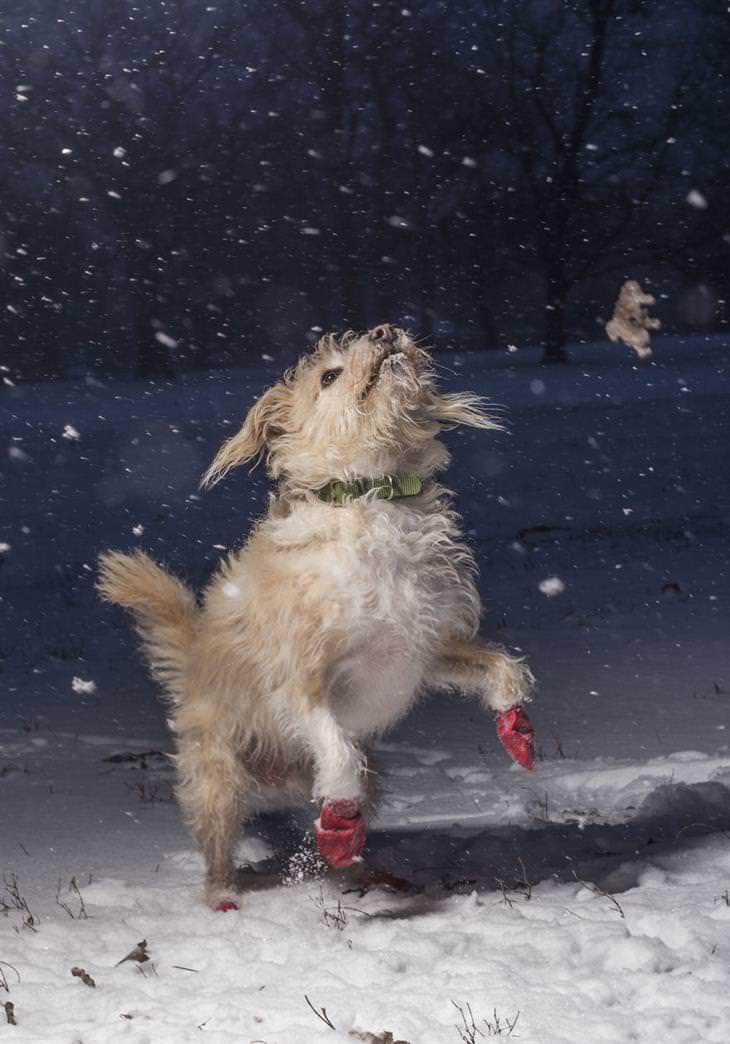 fotografías concurso de perros
