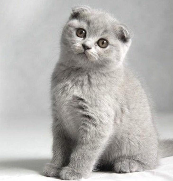 los gatos mas caros del mundo