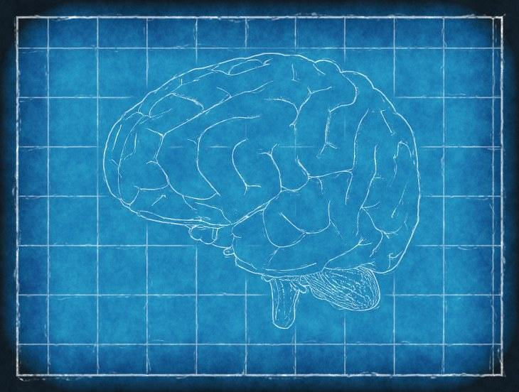 Alzheimer bacterias