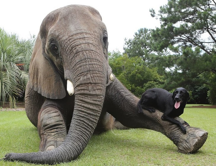historias adopción animales