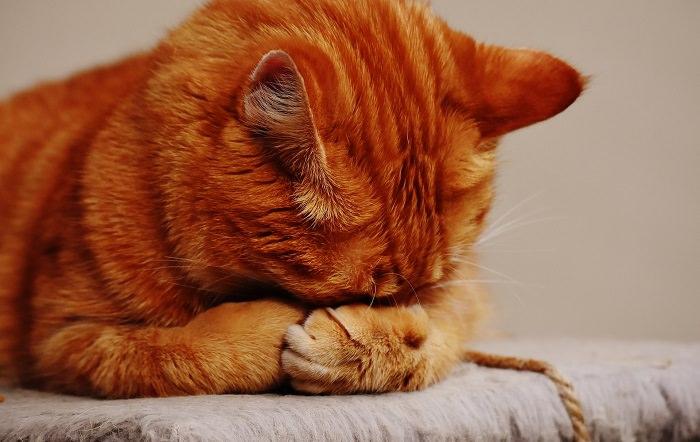 aceites tóxicos para gatos