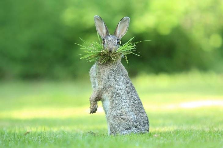 fotos de animales divertidas