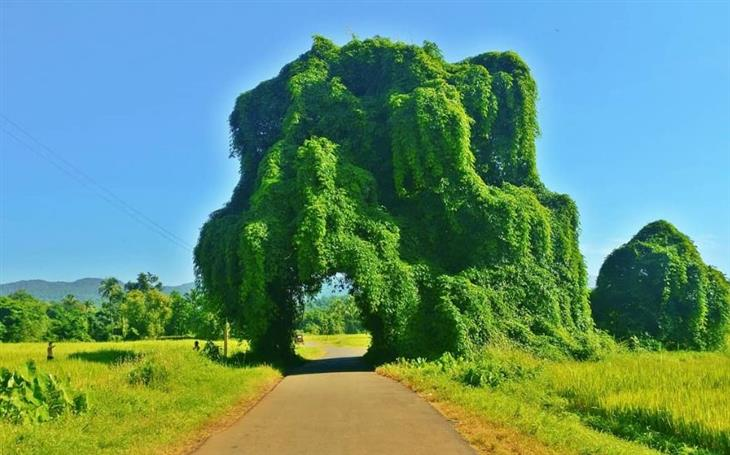 21 fotos naturaleza