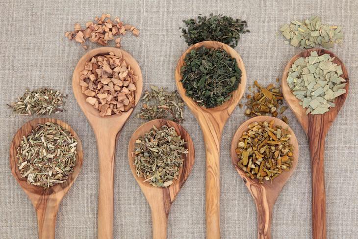 9 plantas remedios naturales nativos americanos