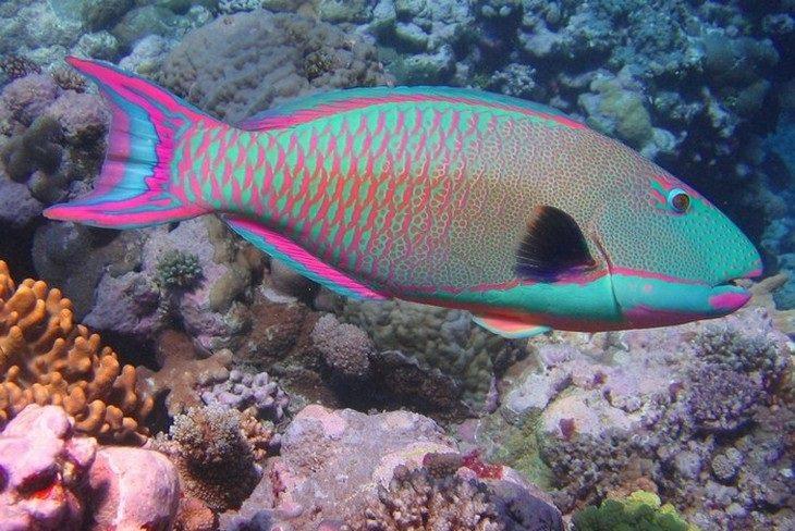 18 peces hermosos