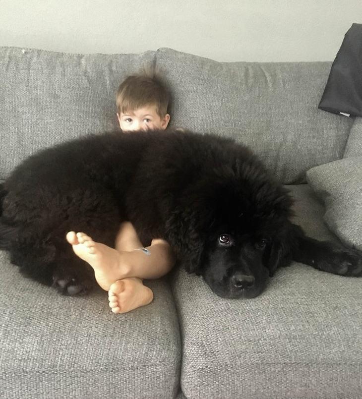 Mascotas gigantes