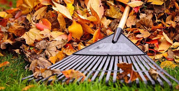 eliminar hojas jardín sin rastrillo