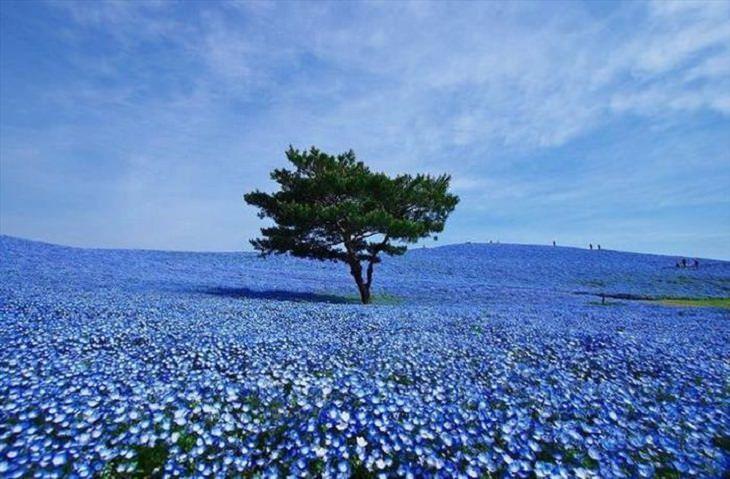 naturaleza azul hermosa