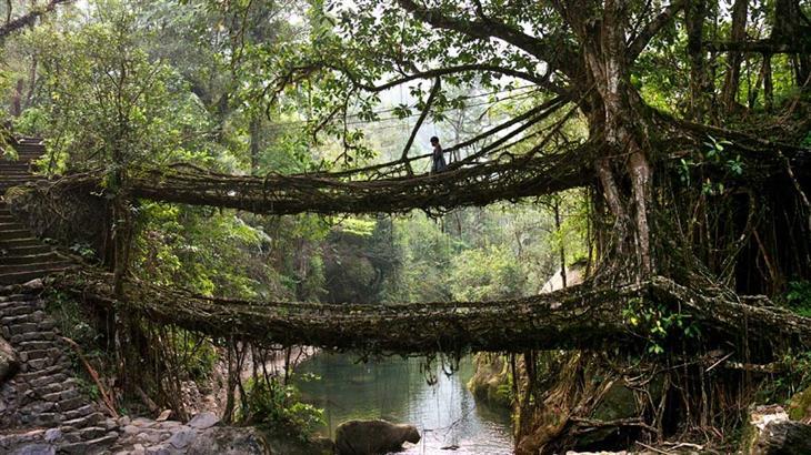 15 plantas extraordinarias