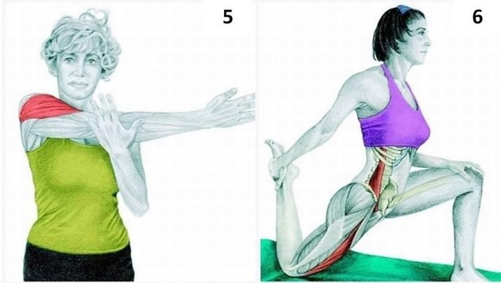 guía estiramiento músculos