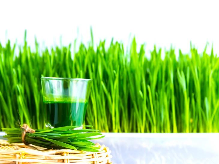 beneficios de pasto de trigo