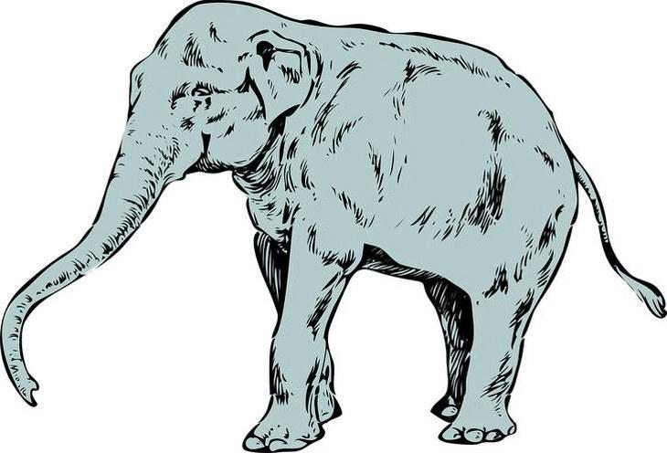 Primer Animal Que Ves muestra Personalidad