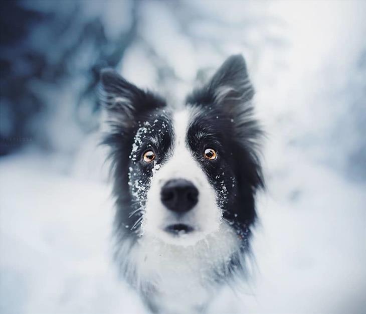 Fotos De Perros Hermosas