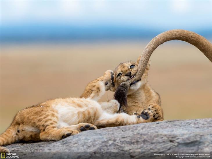 Aquí Están Las Mejores Fotos De National Geographic En2018