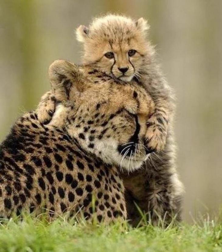 animales bebés