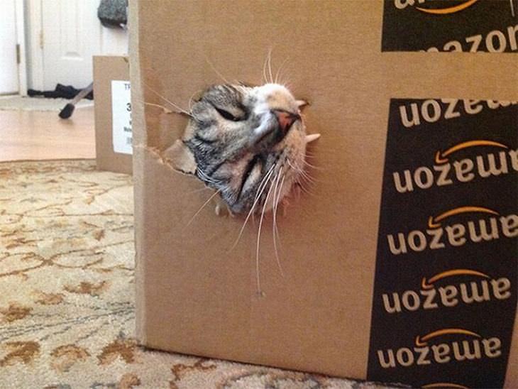 gatos que muerden