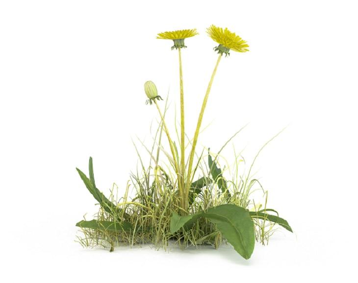 métodos para eliminar las malas hierbas