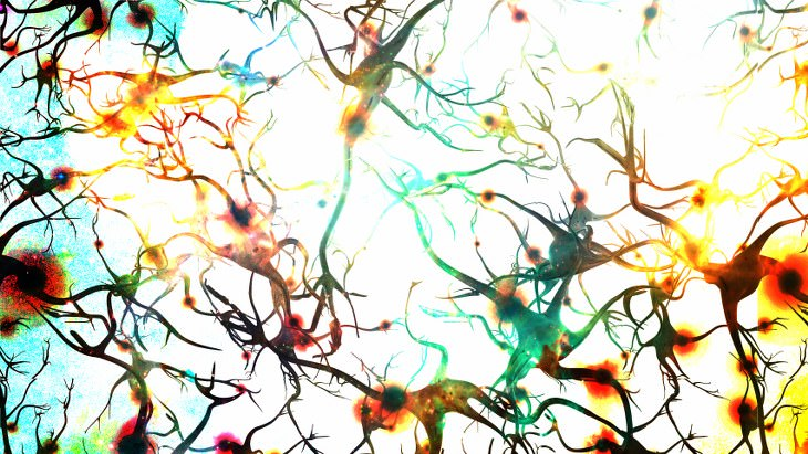 nacen neuronas
