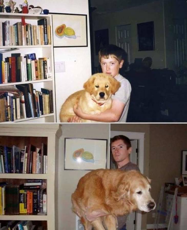 de cachorros a adultos