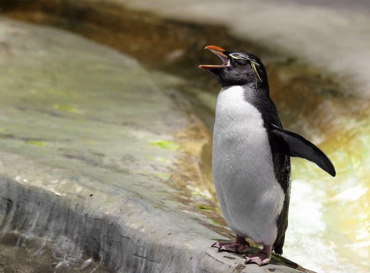 chiste pingüino