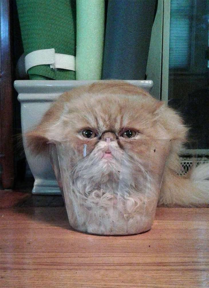 gatos parecen líquido