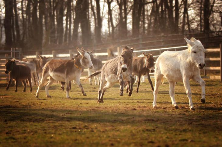 Fotos burros lindos