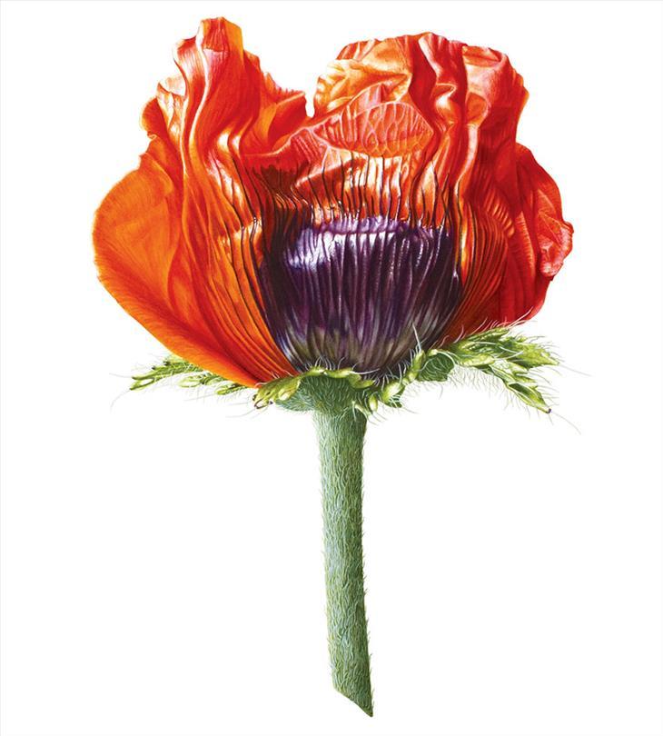 flores hiperrealistas