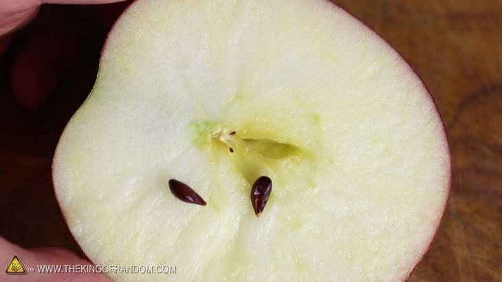 cisne de manzana